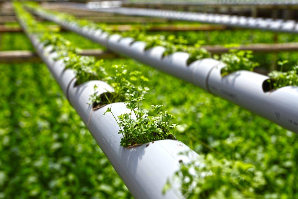 Что такое гидропоника, каковы ее польза и вред, как выращивают растения по этой технологии{q}