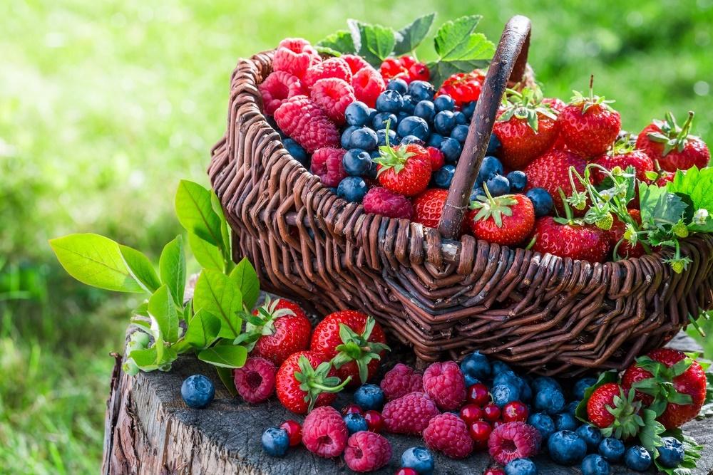 Красные ягоды тундры