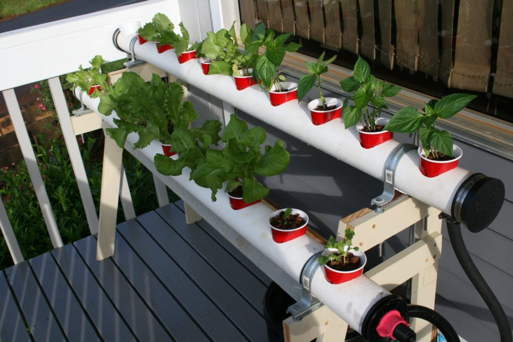Из клубники семян выращивание гидропоника конопли беларусь выращивание